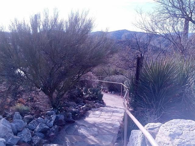 5 Outdoor Activities to Enjoy in Tucson