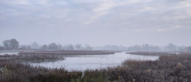 misty, wintry view over Floodplain Forest Nature Reserve.