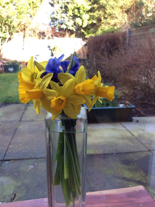 Mini Daffodils and Iris - 16 March 2015