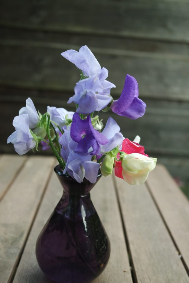 Sweet peas and Purple glass vase from Eden Centre