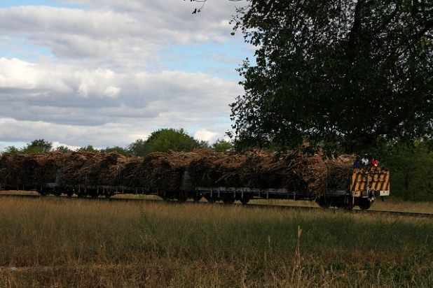 A train is transporting sugarcane from the fields in Zimbabwe. (Photo by by Ullisan, Creative Commons License)