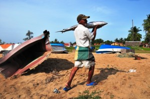 Despite the fish-rich seas, northern fishing has yet to recover from the conflict that ended in May 2009. (Photo by Amantha Perera/IRIN)
