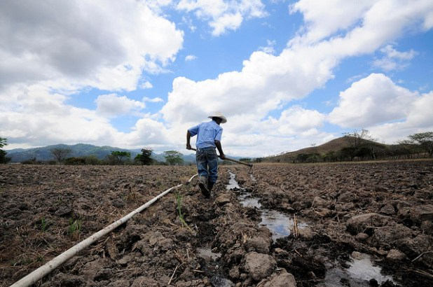 A farmer digs irrigation channels for his maize crop during Honduras' intense dry season. (Photo by by CIAT International Center for Tropical Agriculture)