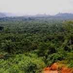 The forest of Gbarpolu County. Shot outside Bopolu, Liberia. (Photo by tlupic, Creative Commons License)