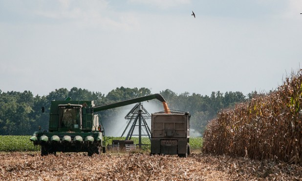 A six-row corn harvester during the feed corn harvest at the John N. Mills & Sons farm; a family-owned business located in the Hanover and King William Counties of Virginia, on Sept. 20, 2013. (Photo by USDAgov)