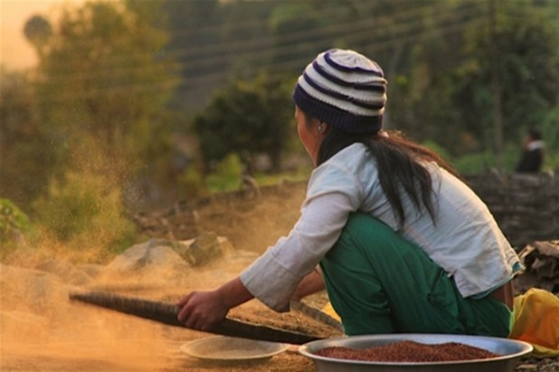 A young girl cleaning rice in Nepal's Solukhumbu District. Poverty is particularly pervasive in Nepal's rural areas. (Courtesy of dZi Foundation)