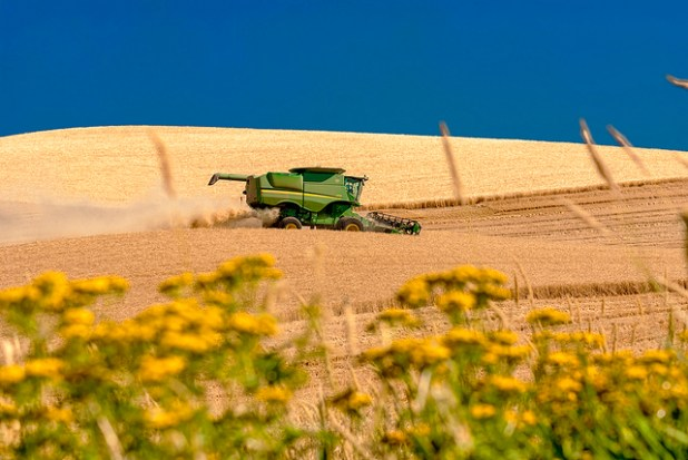 Wheat being harvested at an American farm. (Photo by Charles Knowles, Creative Commons License)