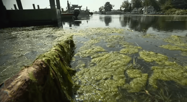 A view of algae at Lake Erie. (Photo via Quest Science video)