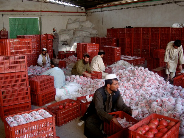 Packaging pomegranates in Afghanistan. (Photo by Canada in Afghanistan, Creative Commons License)