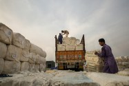 Pakistan's Cotton Production to Go Up