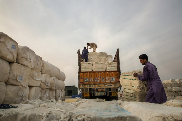 Pakistan's cotton production is likely to go up. (Photo by Asian Development Bank, CC license)