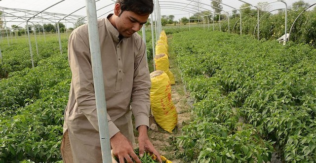 Pakistani Farmers Are Gearing Up for India-Like Protests