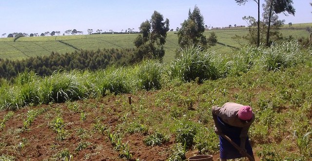 Land Deals Meant to Improve Food Security May Have Hurt