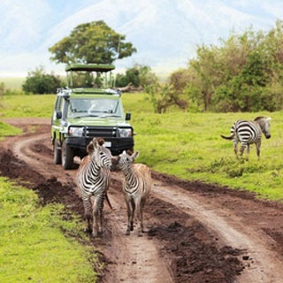 African Safari Getaway - View the VIBE