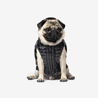 Canada Pooch Special Edition Puffer Jacket - View the VIBE
