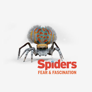 The Royal Ontario Museum Tickets Spider Exhibit - View the VIBE
