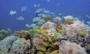 corals-survive