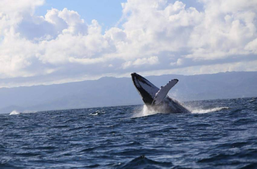 Inician proceso autorizaciones observación de ballenas
