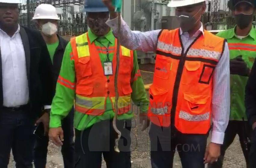 «Esta es la culpable», culebra causa incendio y apagón en Puerto Plata