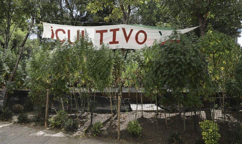 En México Iglesia censura iniciativa para legalizar marihuana
