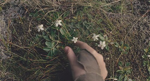 """Noah tells to his son """"You see how the flowers are attached to the ground? Its where they should be. They have a purpose."""""""