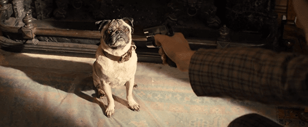 To complete his initiation with Kingsman, he is asked to shoot the dog he was asked to care for since he was a puppy.