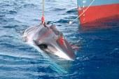 RD entre los 11 países que votaron a favor de preservar las ballenas jorobadas