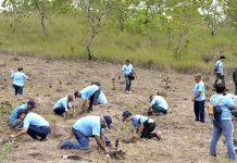Mes de la Reforestación