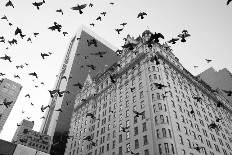 JAMES MAHER PHOTOGRAPHY 5