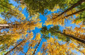 appreciation, workplace, leadership, trees