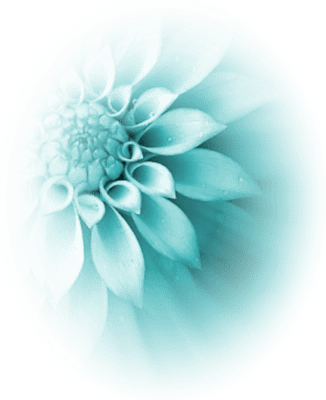 turquoise flowers background   Kleo beachfix co turquoise flowers background