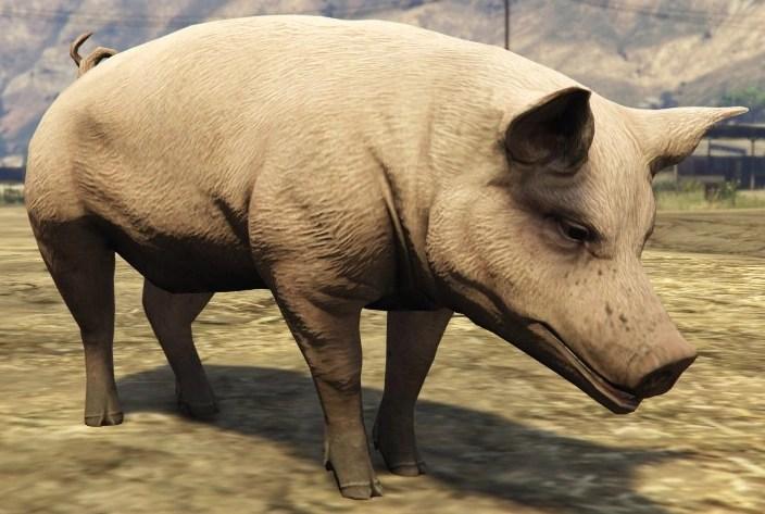 Pigs GTA Wiki Fandom powered by Wikia