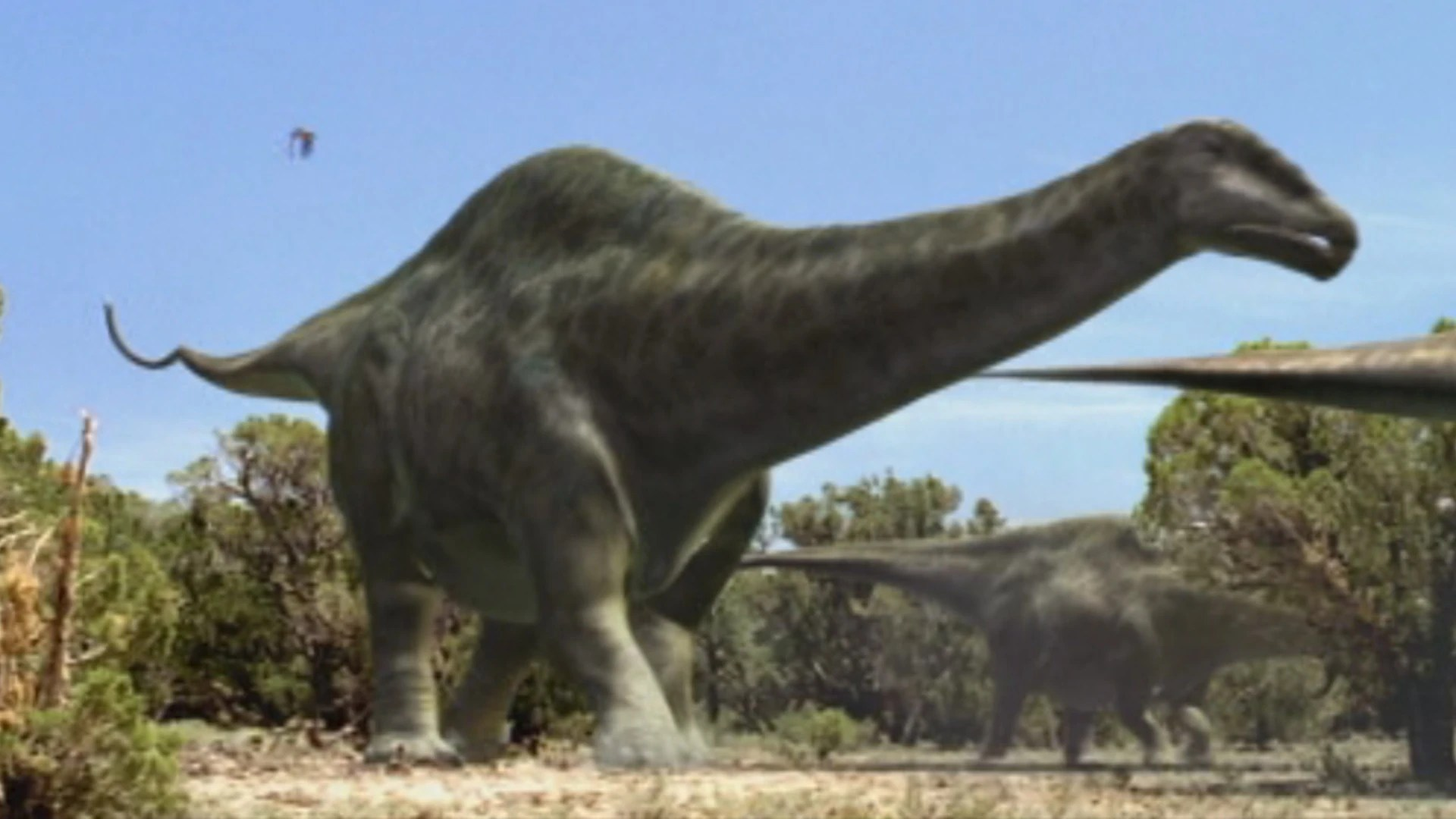Apatosaurus Walking With Wikis Fandom Powered By Wikia