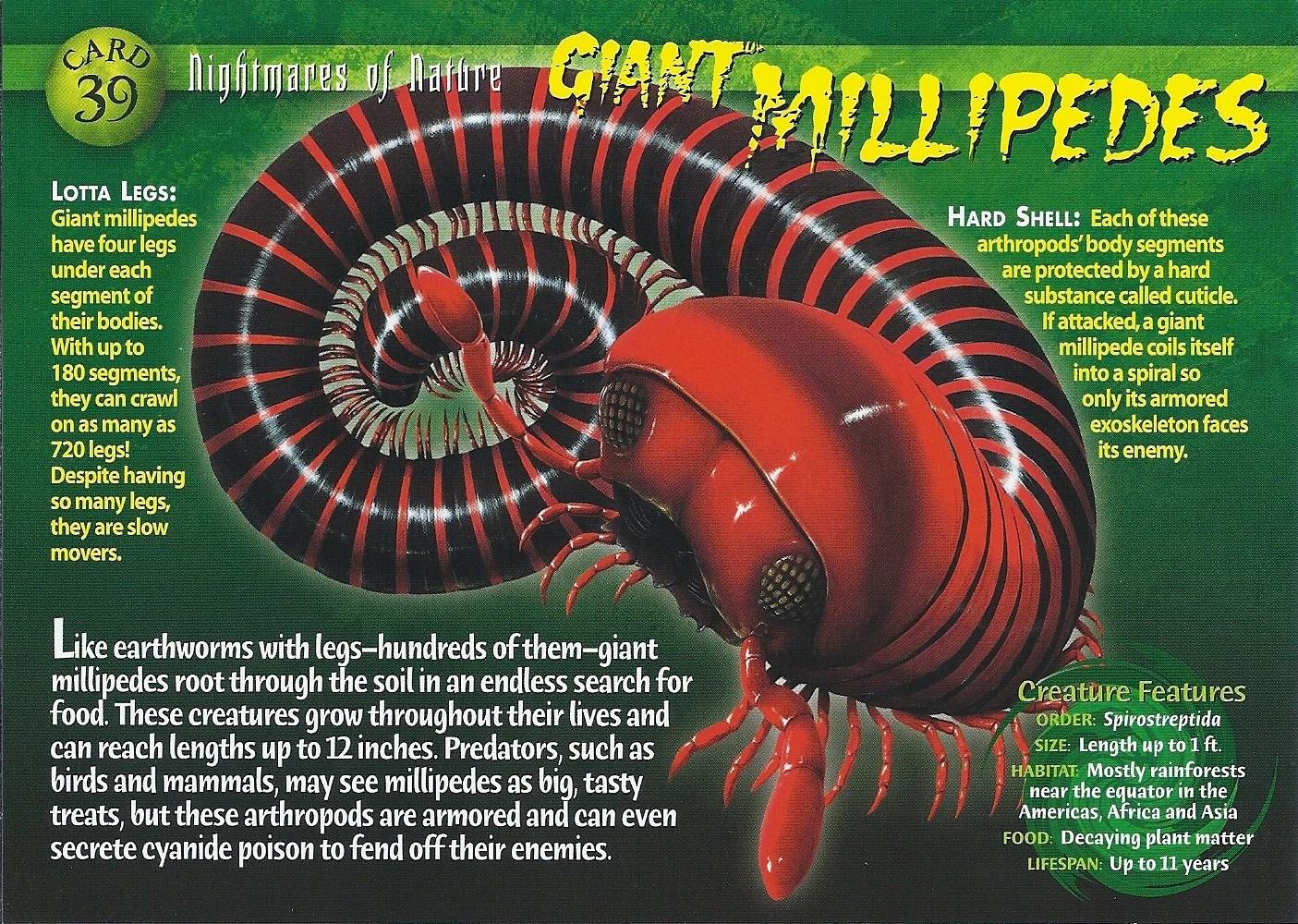 Giant Millipede Wierd Nwild Creatures Wiki Fandom