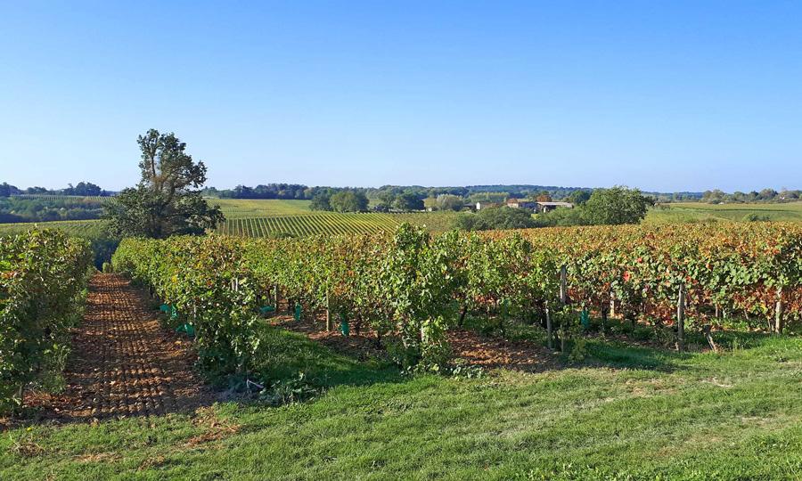 Domaine Chiroulet - Côtes de Gascogne