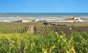 Vineyards of Occitanie - south-east