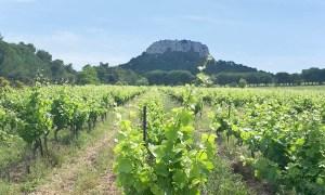 Château Pech Redon - Vins de La Clape