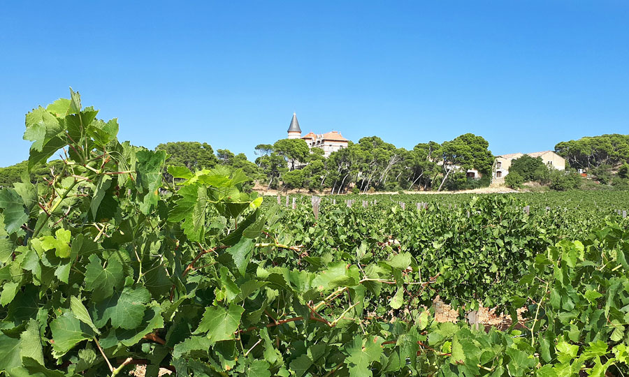 Château Capitoul - Vins de La Clape