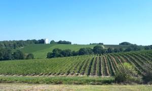 Domaine de Joy - Côtes de Gascogne et Armagnac