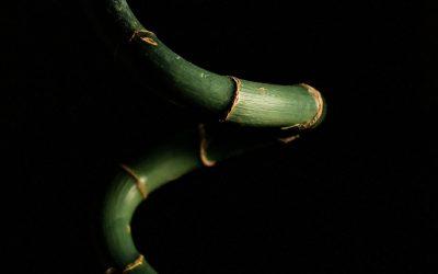 ¿Cuanto crece el pene con el extensor?