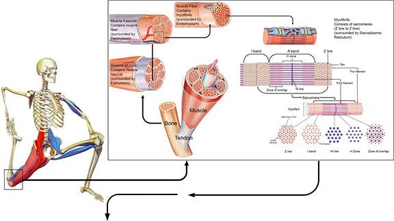 tissue illustration
