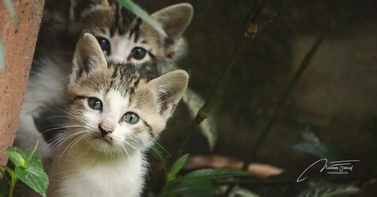 Deux petits chatons
