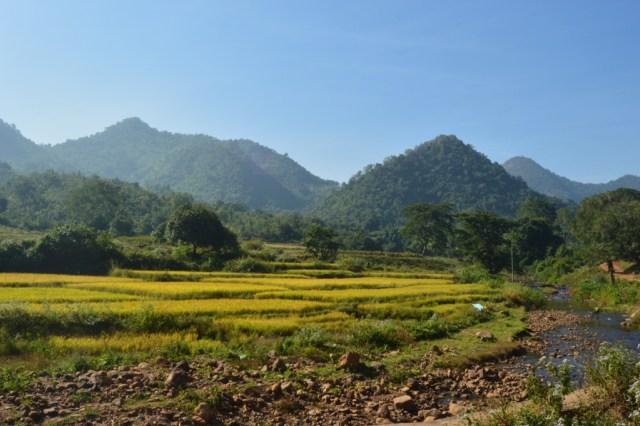 The green expanses of Niyamgiri