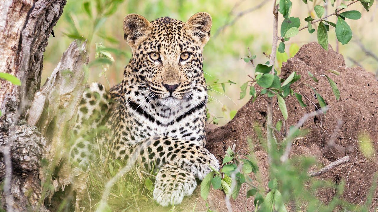 The Kruger National Park.