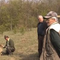 Jedinstven snimak pustanja tri vuka u divljinu