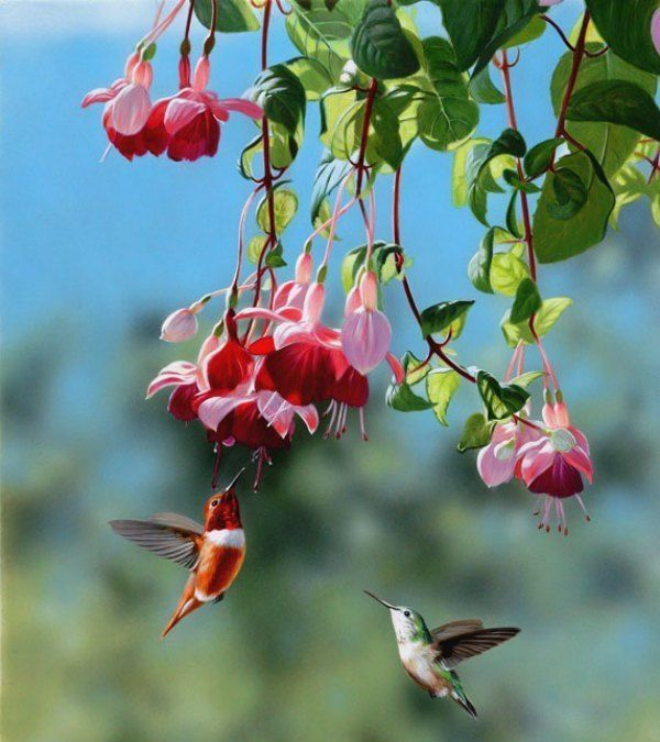 Why the term 'Hummingbird'?