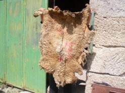 Pele de ovelha com lã, uma samarra
