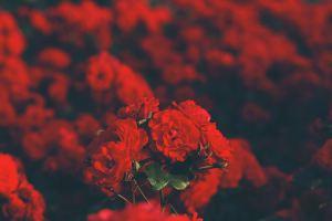 Att leva MED menscykel – istället för mot den