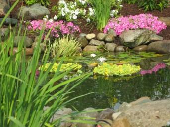 Landscape_Pond_Planting_Fenton