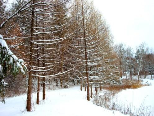 Along Borden's Pond public trail - Columbia Land Conservancy